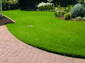 Need Professional Lawn Care?
